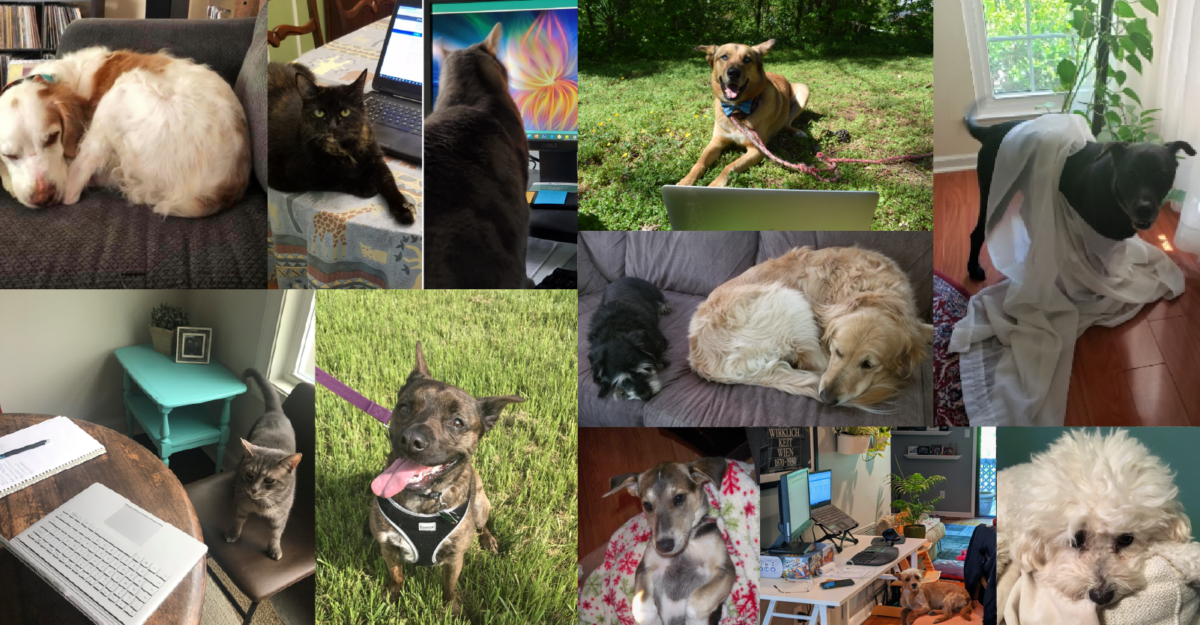 Collage of the FHLI staff's pets