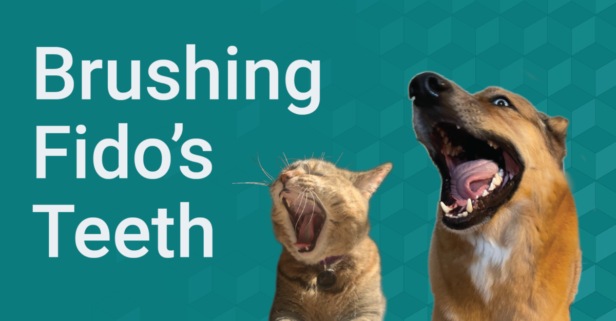 Brushing Fido's Teeth